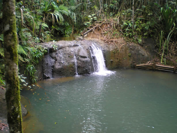 Colo I Suva Forest Park