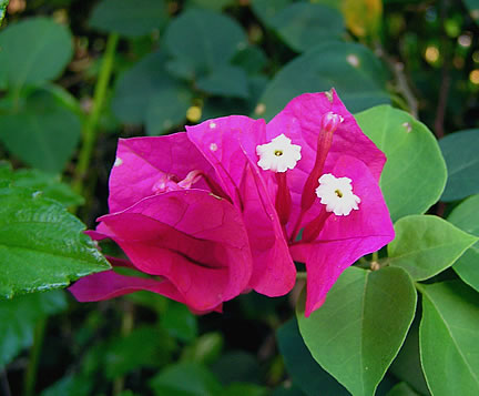 Unknown variety of flower