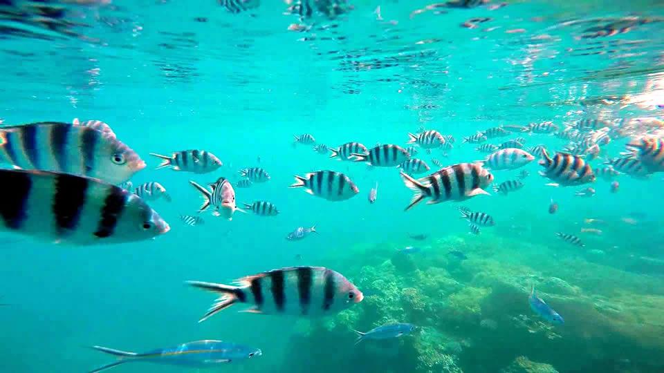 Treasure Island Fiji Desktop